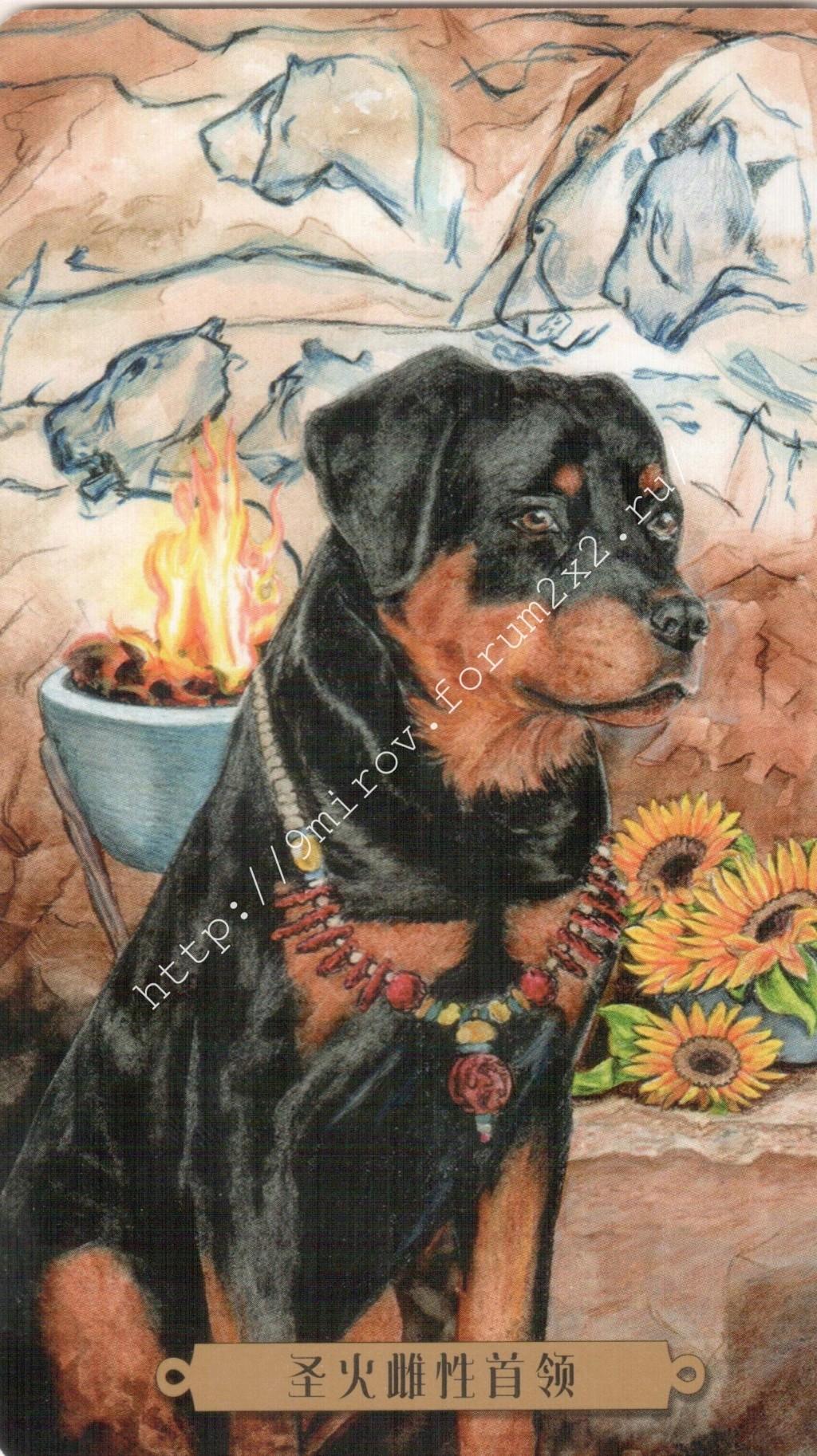 Таро мистических собак. Галерея. (китайская версия) Water207