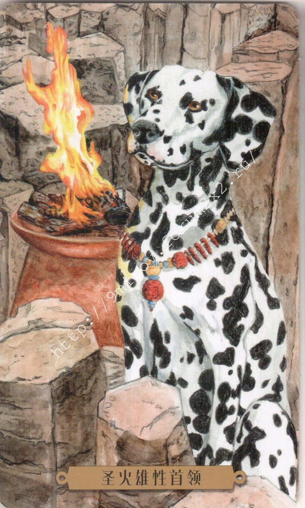 Таро мистических собак. Галерея. (китайская версия) Water208