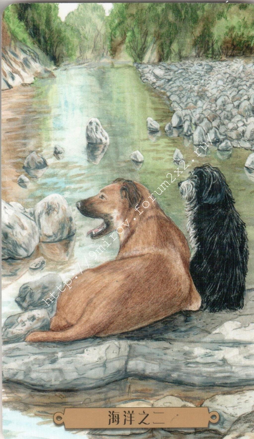 Таро мистических собак. Галерея. (китайская версия) Water210