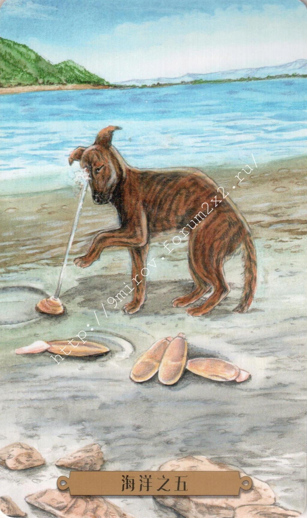 Таро мистических собак. Галерея. (китайская версия) Water213