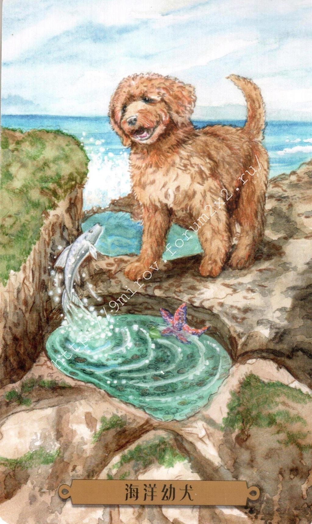 Таро мистических собак. Галерея. (китайская версия) Water219