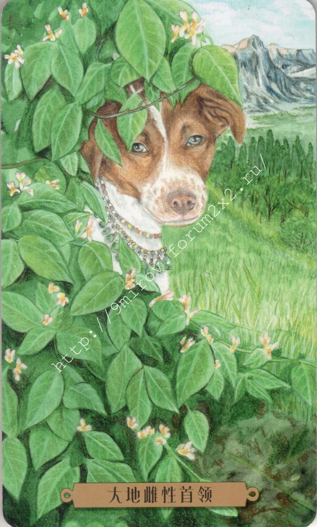 Таро мистических собак. Галерея. (китайская версия) Water235