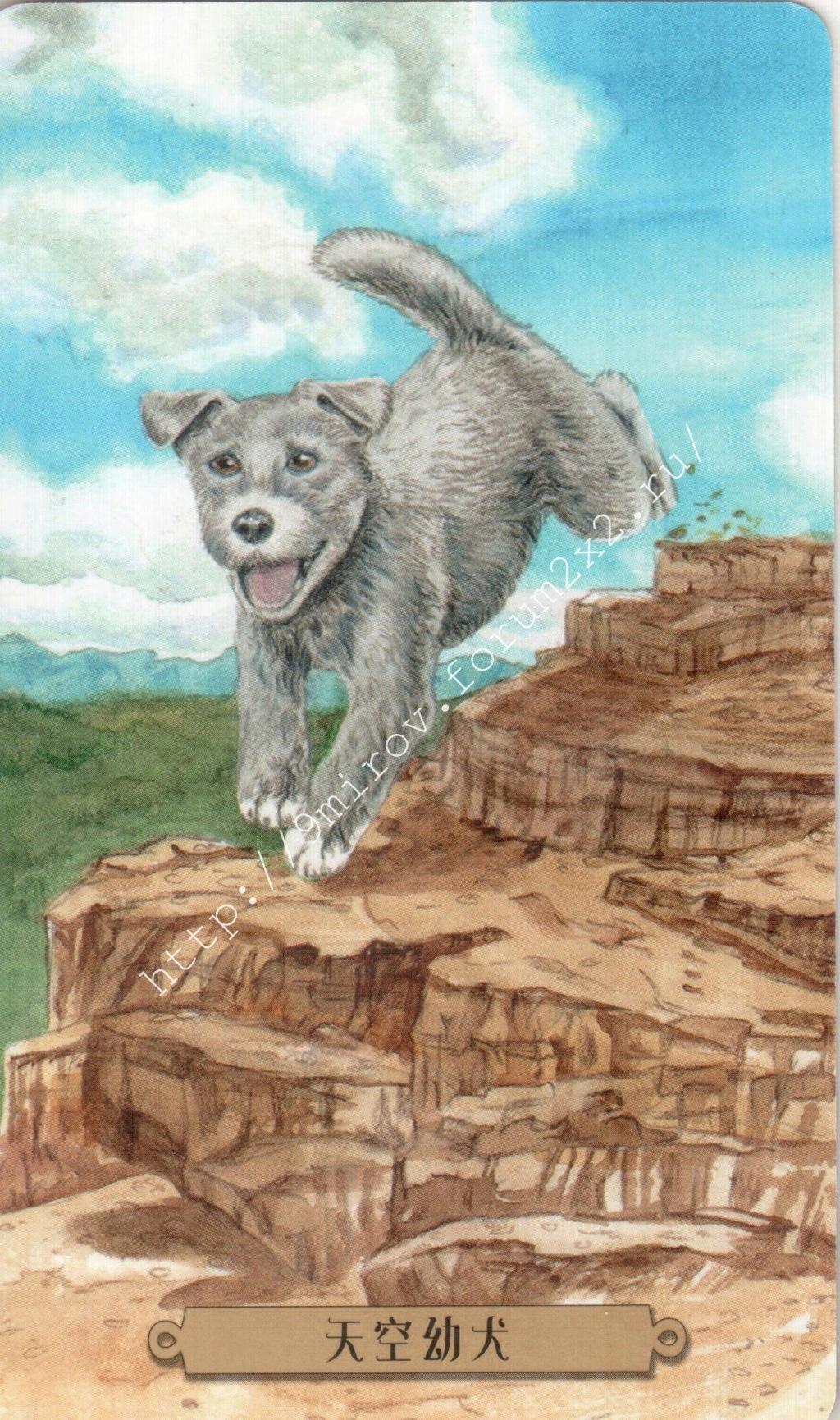 Таро мистических собак. Галерея. (китайская версия) Water247