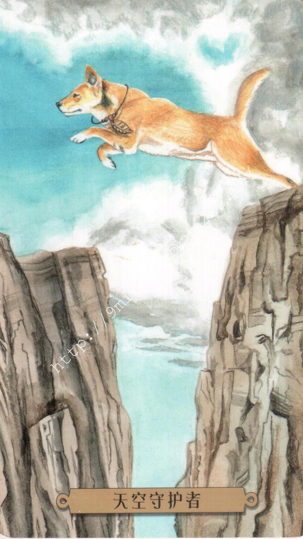 Таро мистических собак. Галерея. (китайская версия) Water248