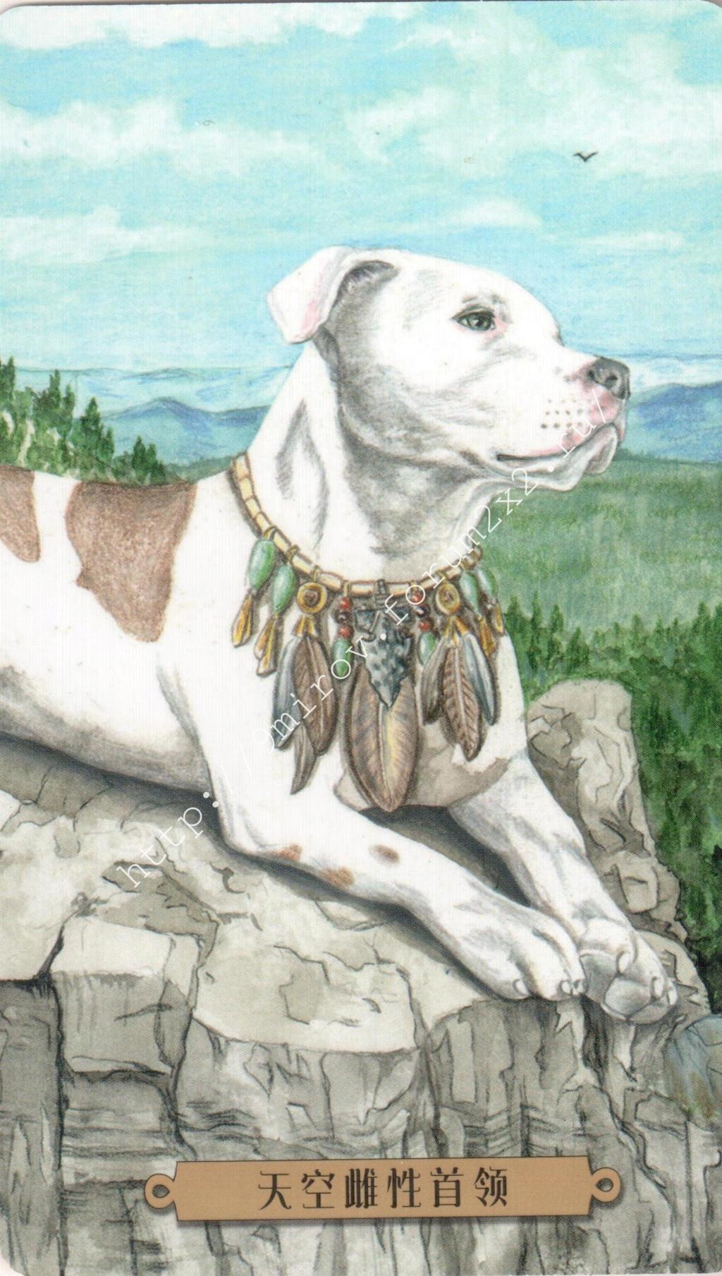 Таро мистических собак. Галерея. (китайская версия) Water249