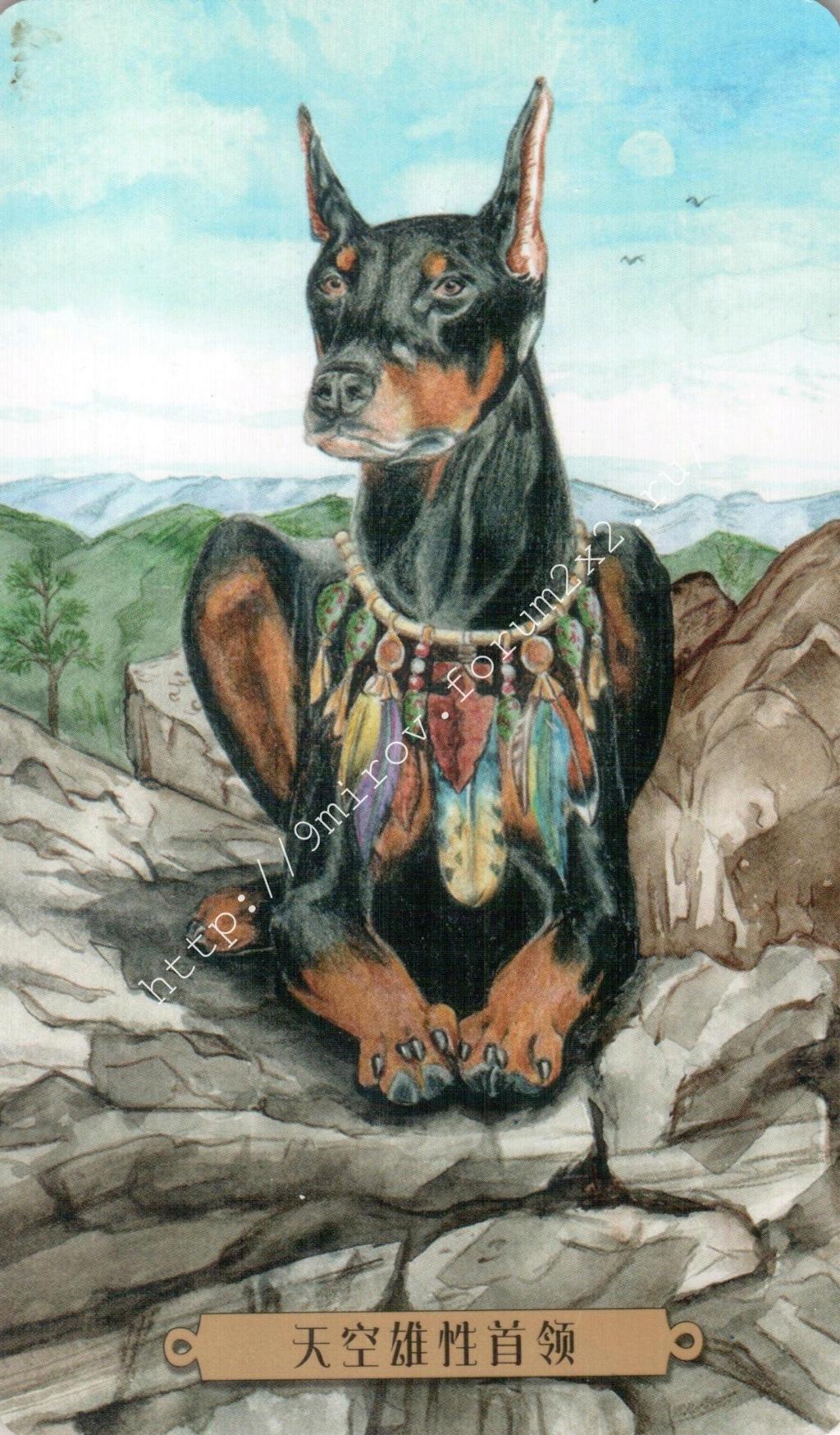 Таро мистических собак. Галерея. (китайская версия) Water250