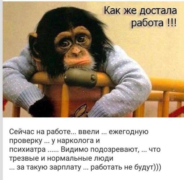 С юмором по жизни - Страница 29 55509710