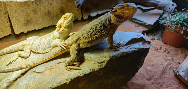 Mes trois dragons  40119710