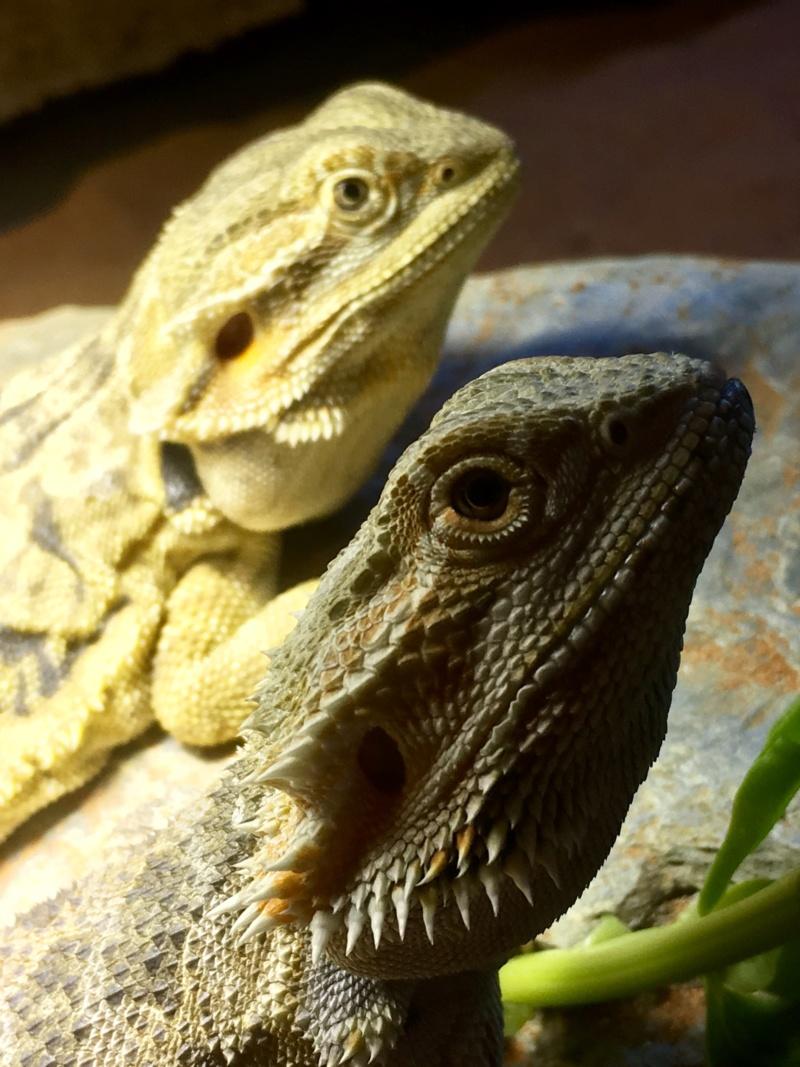 Mes trois dragons  Img_2710