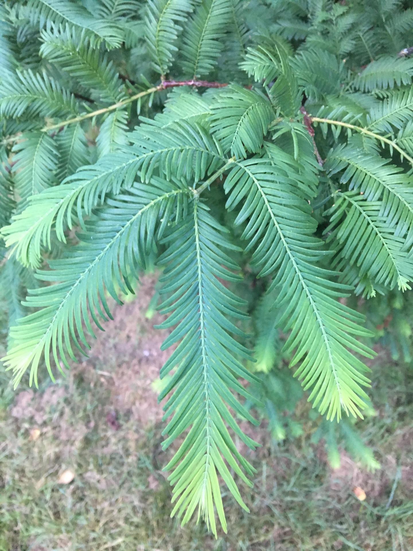 ¿Sabéis que árbol es? E0c68410