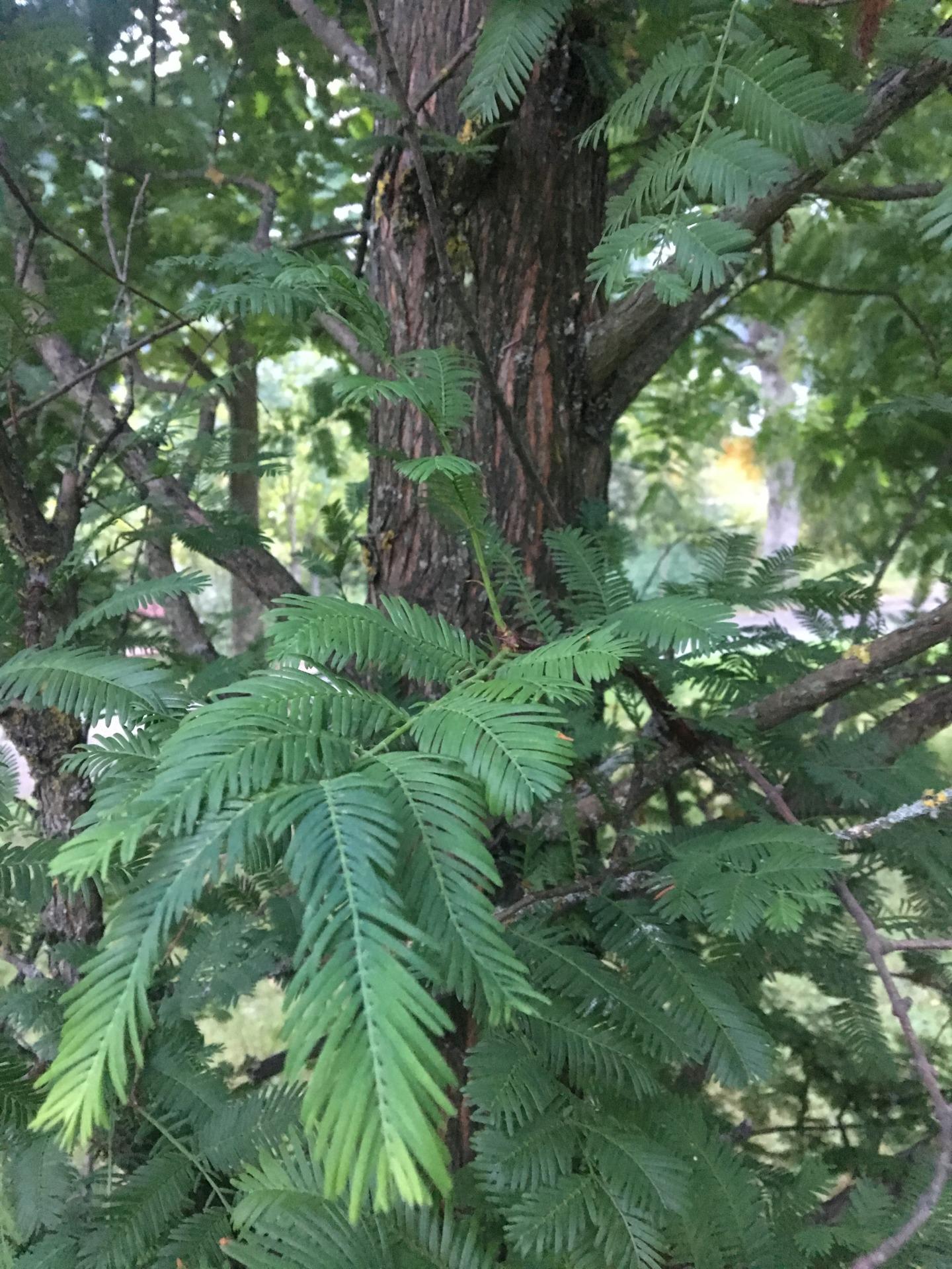 ¿Sabéis que árbol es? E57b7310