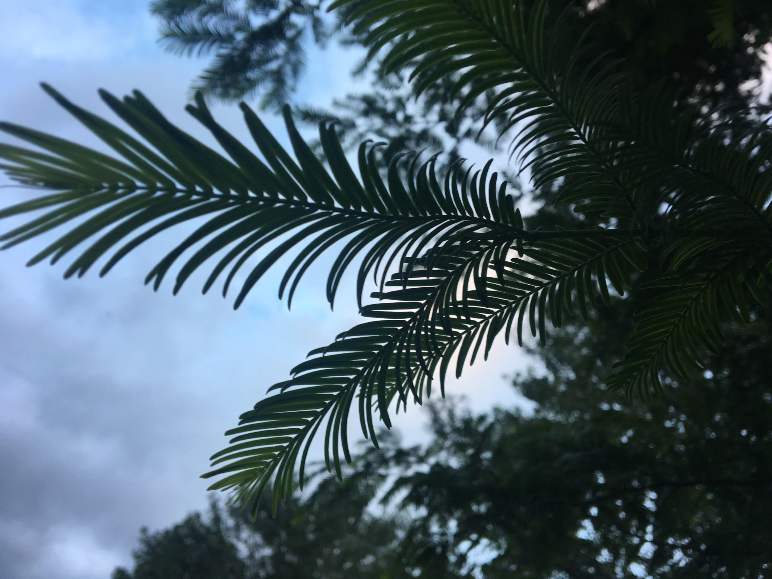 ¿Sabéis que árbol es? Ee772110