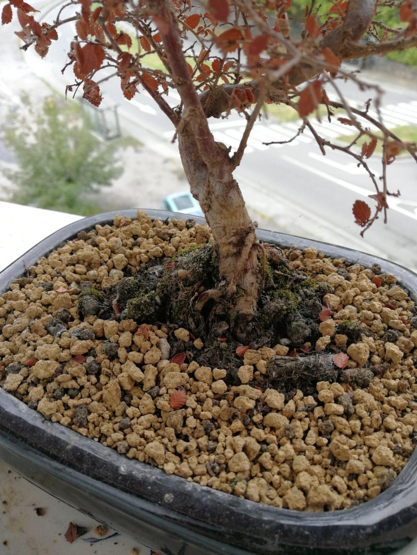 Tengo problemas con mi bonsai Img_2012