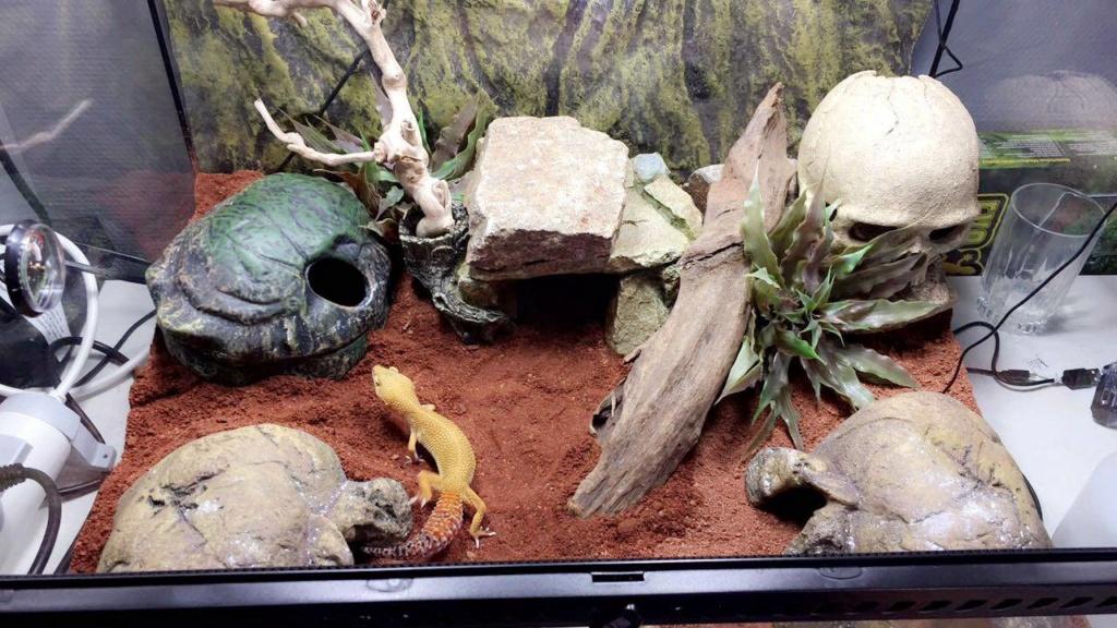 Premier Terra pour Gecko Leopard 43185810