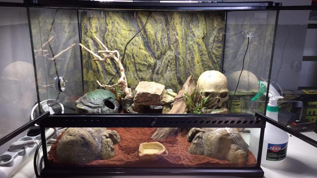 Premier Terra pour Gecko Leopard 43210510
