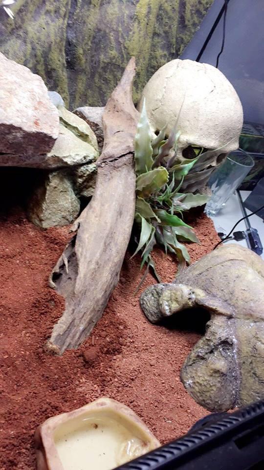 Premier Terra pour Gecko Leopard 43250510