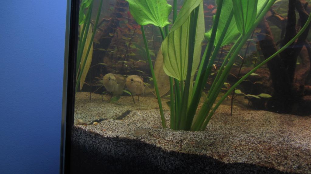 Redémarrage Aquarium 110 L - Page 2 Img_1810