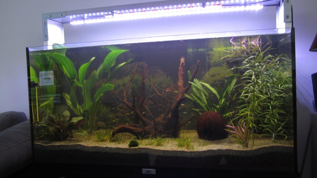 Redémarrage Aquarium 110 L - Page 2 Img_1813
