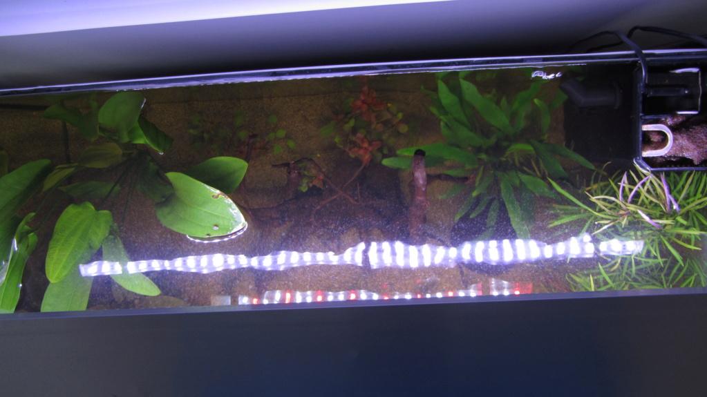 Redémarrage Aquarium 110 L - Page 2 Img_1814