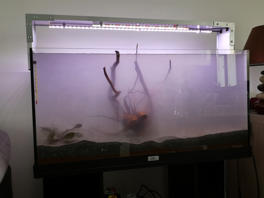 Redémarrage Aquarium 110 L Img_2016