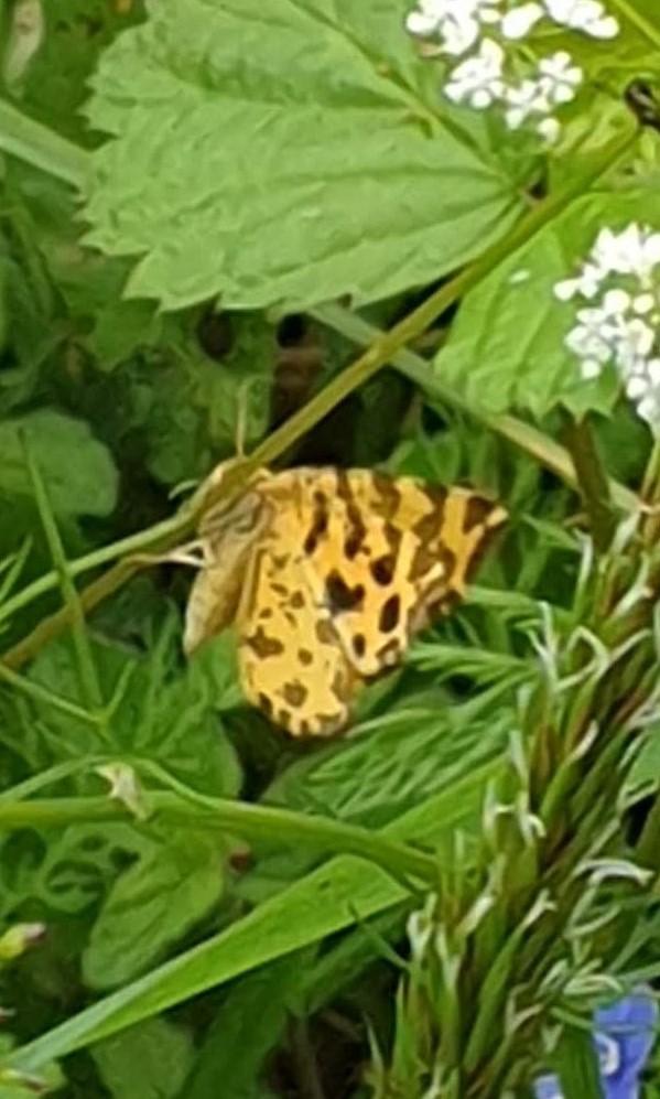 papillon du jour Papill13