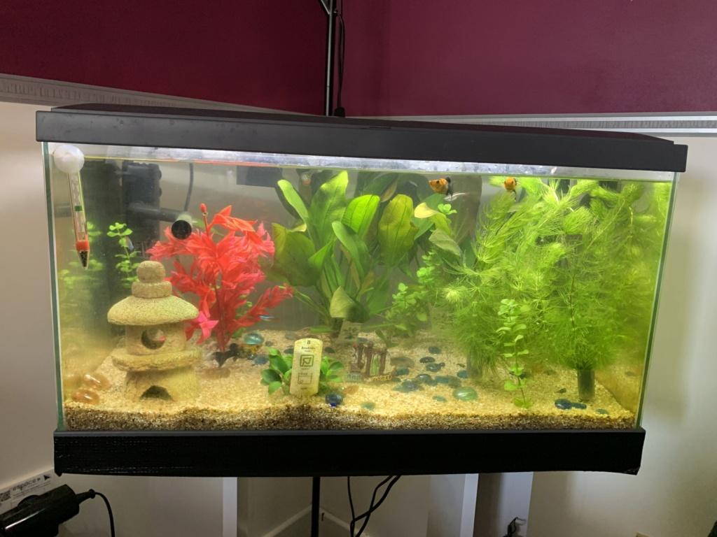Aquarium inwa comfort 60 Img_5910