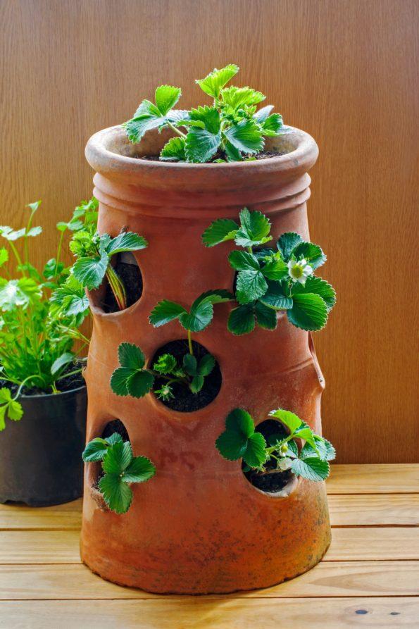 Vos plantes, fleurs, jardin !  - Page 29 Pot-fr10