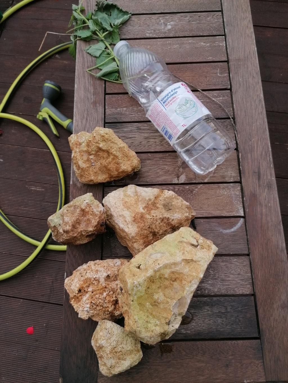 Nos pierres du jardin  Img_2015