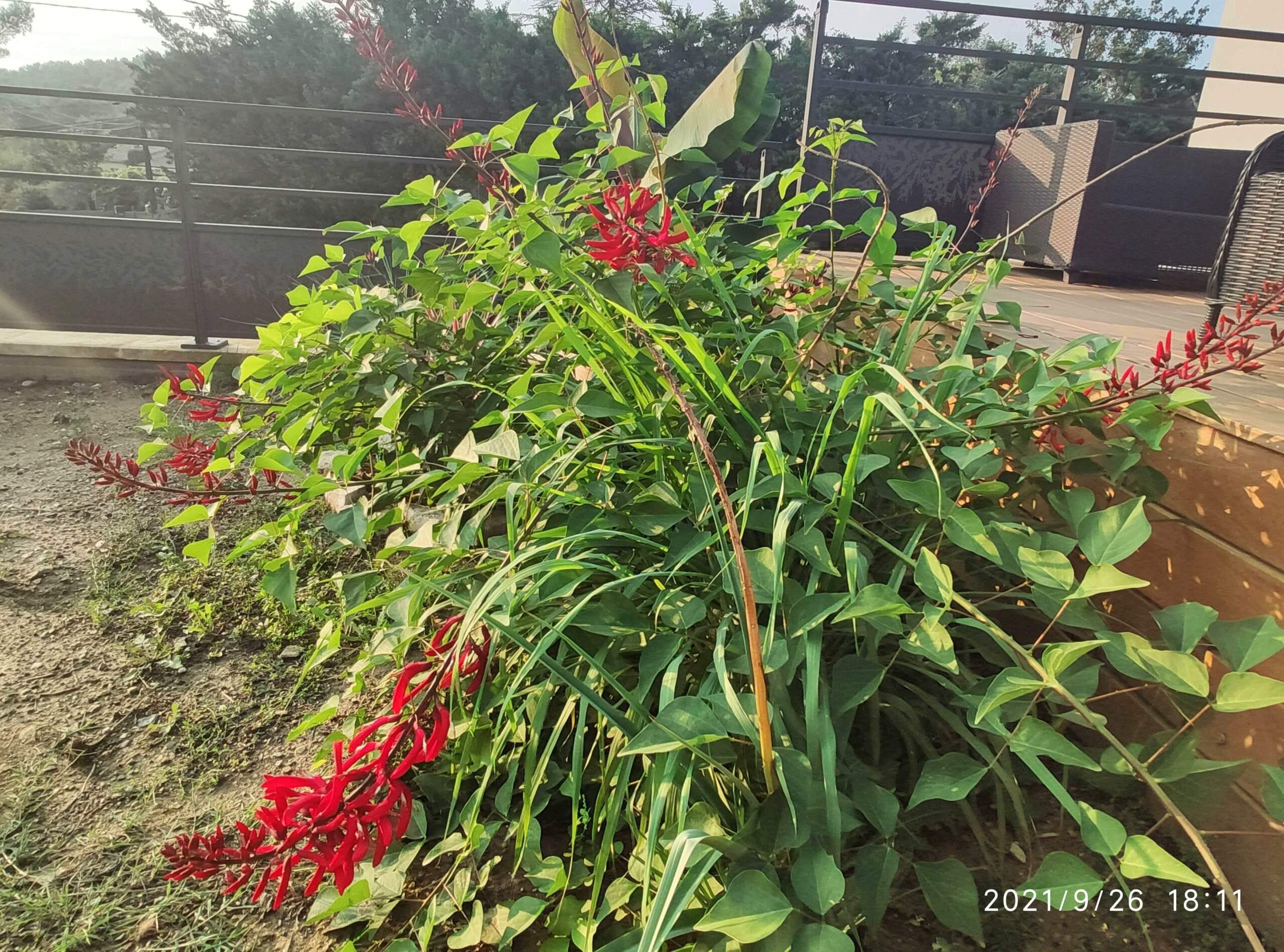 Dernières fleurs d'été, premiers feux d'automne - Page 2 Erythr11