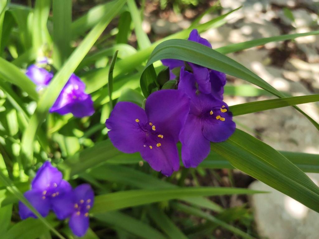 Douceurs jardinières Img_2034