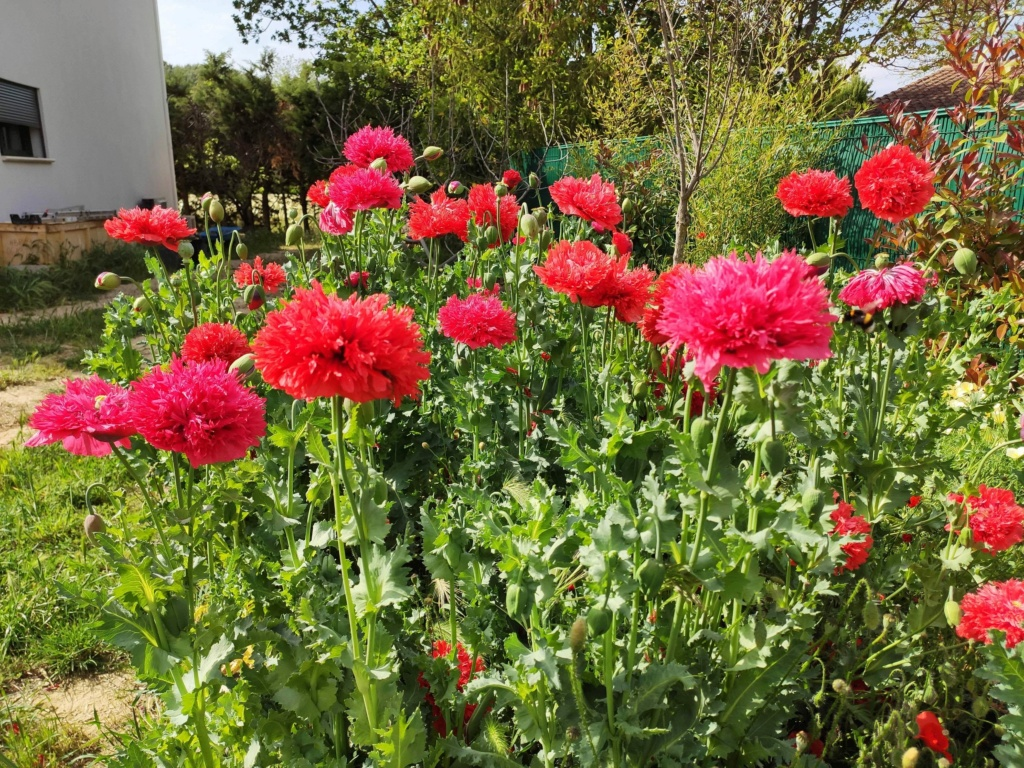 Douceurs jardinières Img_2036