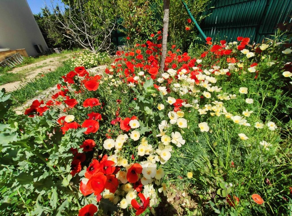 Douceurs jardinières Img_2039