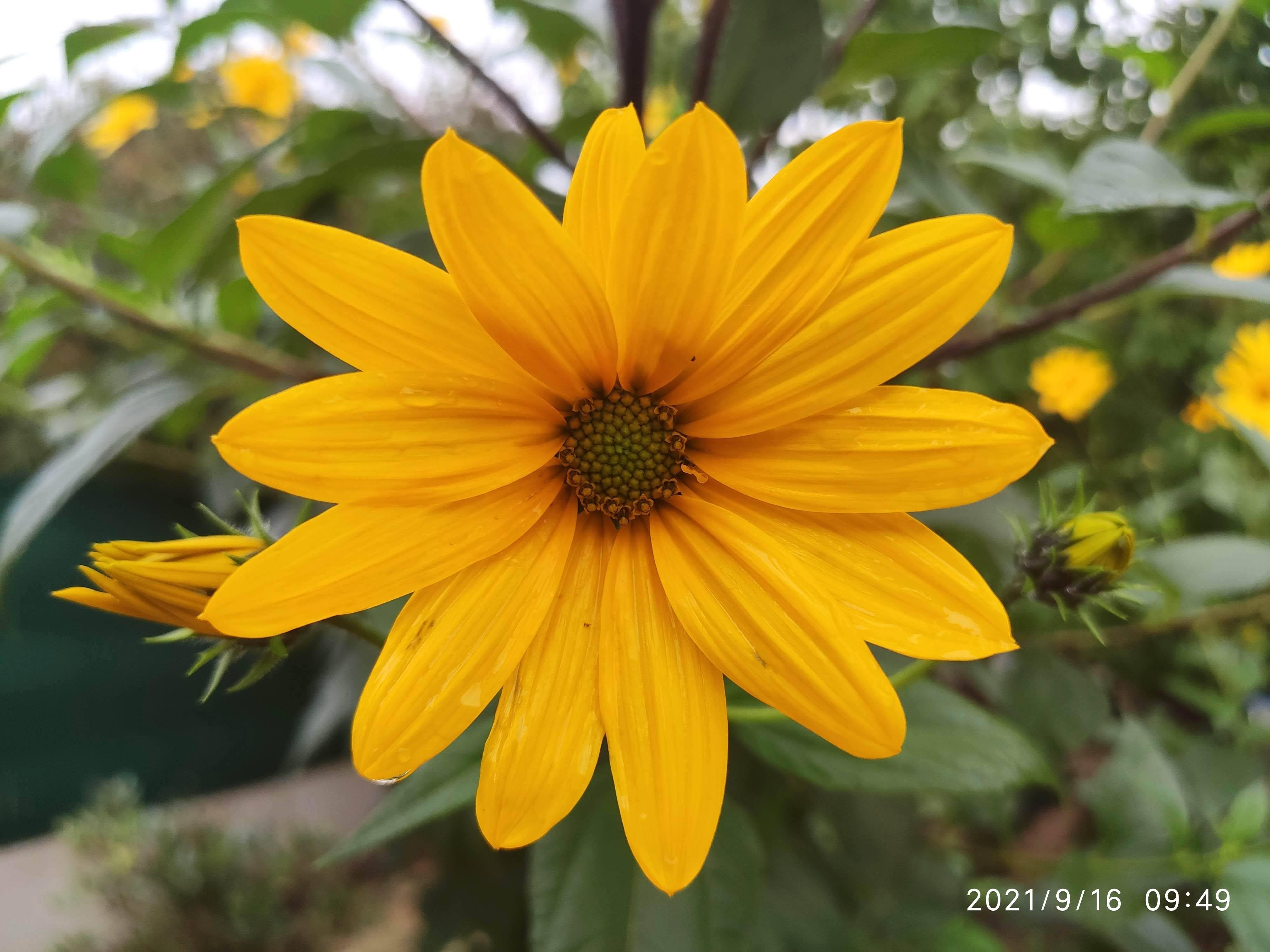 Dernières fleurs d'été, premiers feux d'automne - Page 2 Img_2064