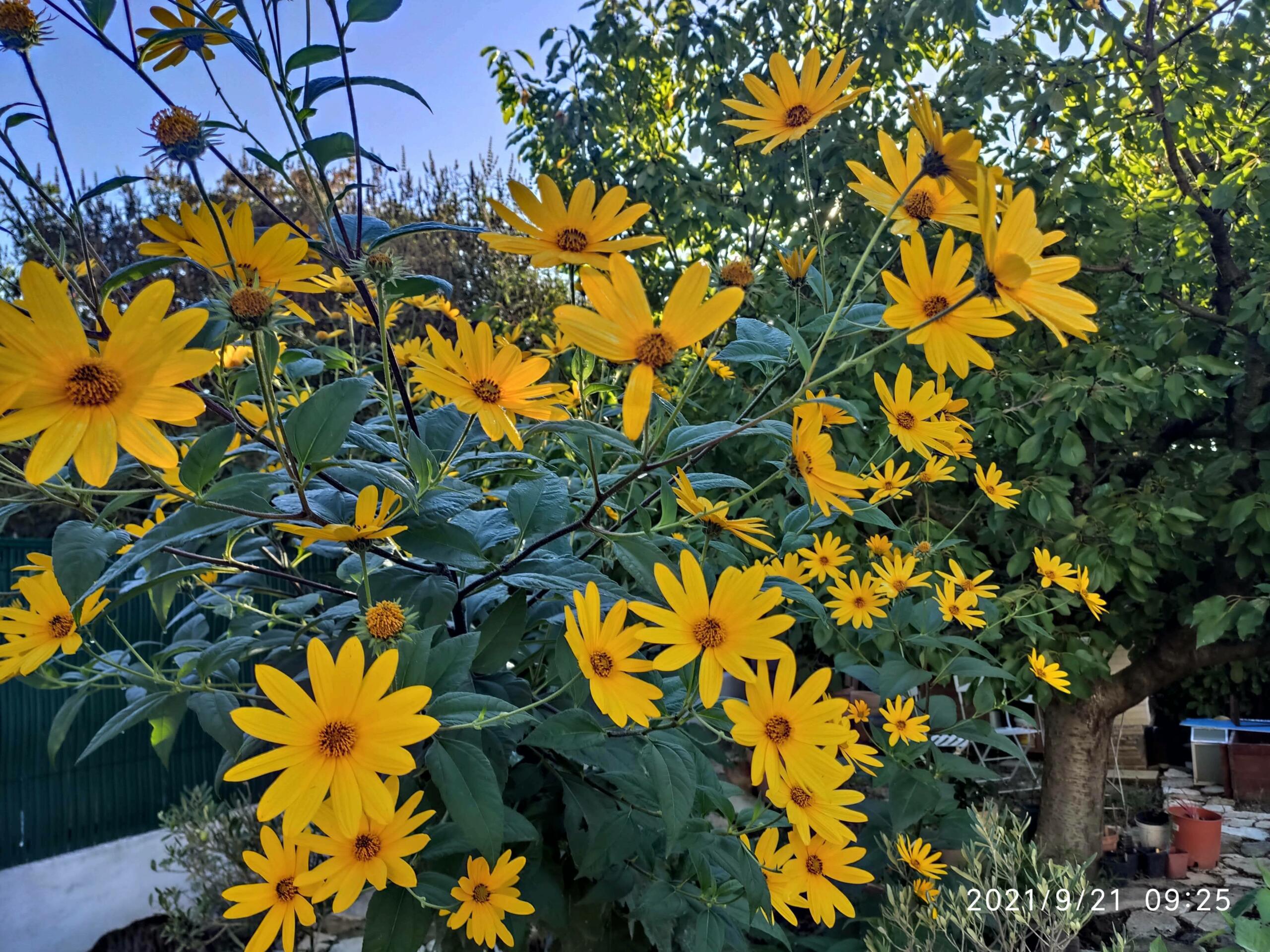Dernières fleurs d'été, premiers feux d'automne - Page 2 Img_2066