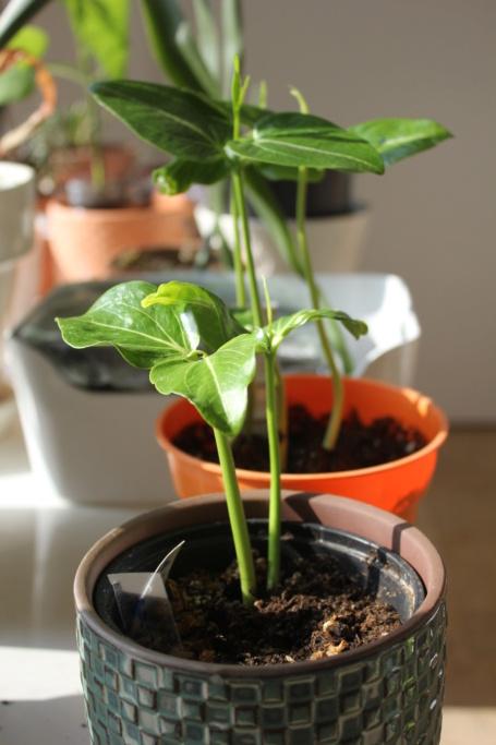 Fruit d'adansonia trouvé par Lu May Img_2210
