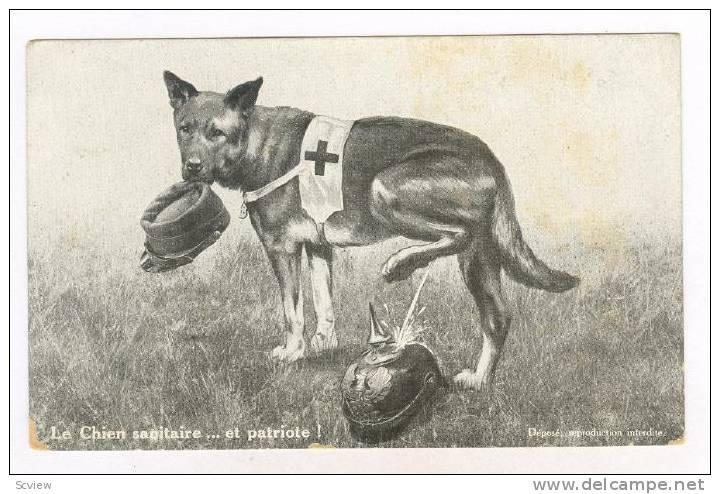 Le chien, compagnon du combattant 239_0011