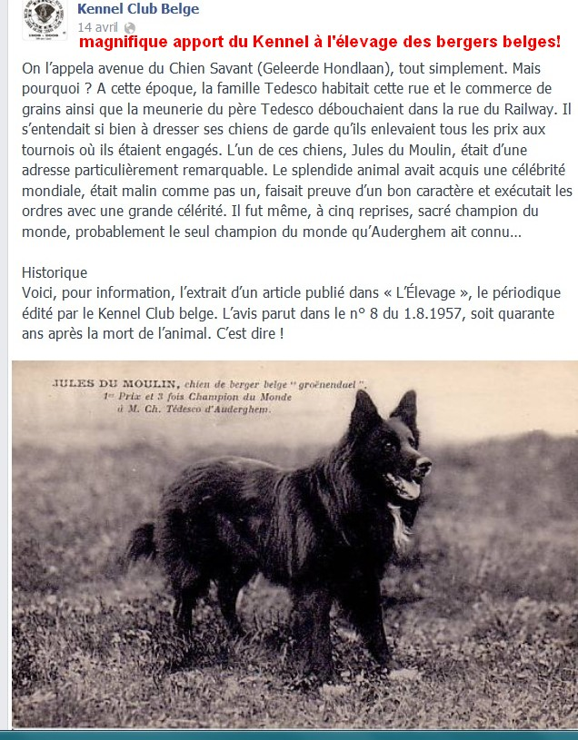 Au kennel club belge Berrge11