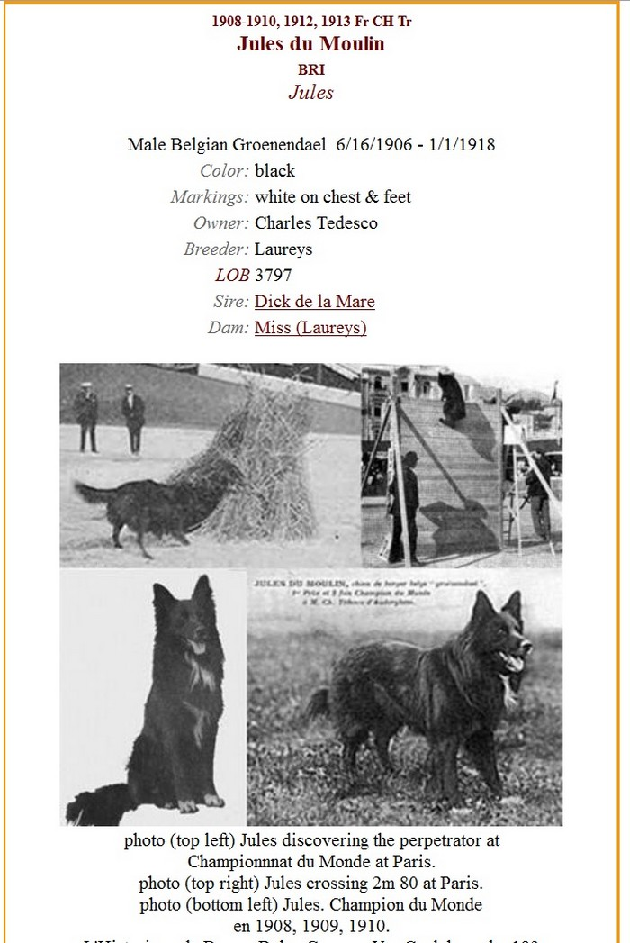 Au kennel club belge Jules10