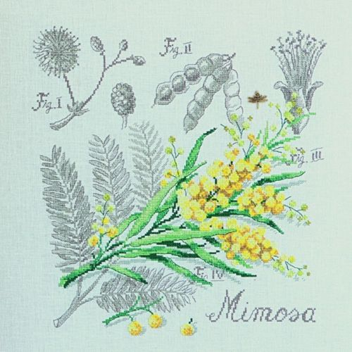 le mimosa de véronique enginger Mimosa10