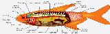 Silure Club Rhodanien Anatom10