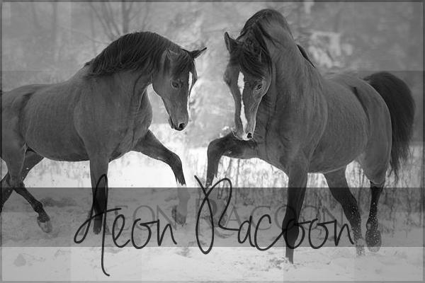 Aeon Racoon - Nëlarion - ♂ Aeon_r10
