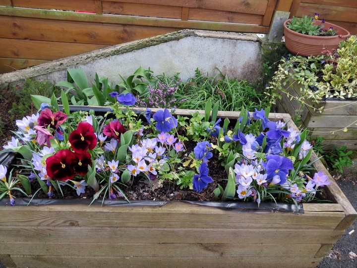 les fleurs dans mon jardin mars,avril 2014 Img_0720