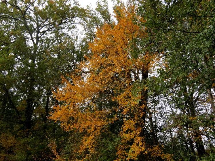 Couleurs d'automne Img_0810