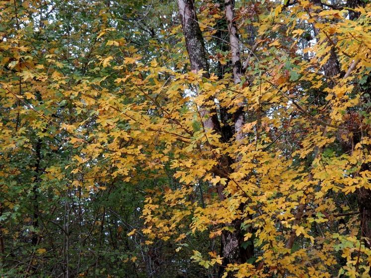 Couleurs d'automne Img_0811