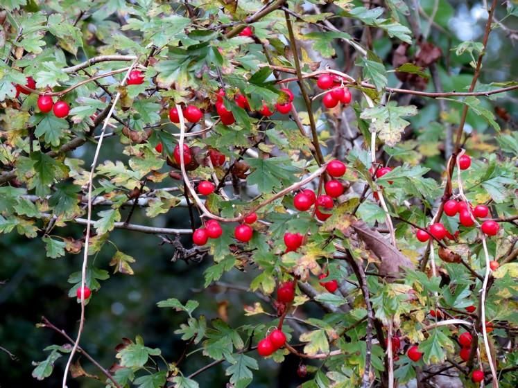 Couleurs d'automne Img_0910
