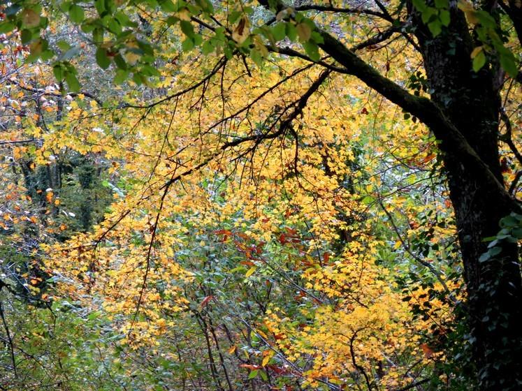 Couleurs d'automne Img_0911