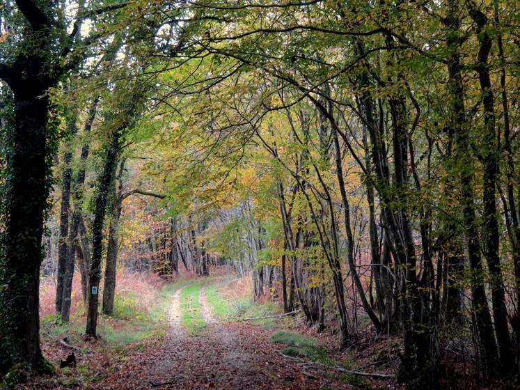 Couleurs d'automne Img_0912