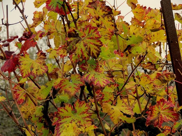 Couleurs d'automne Img_0913