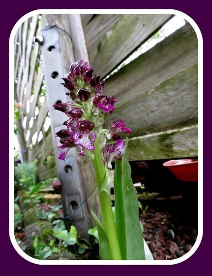 mi mars,début avril mon jardin Img_0940
