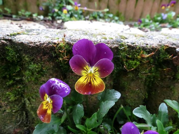 mi mars,début avril mon jardin Img_1012
